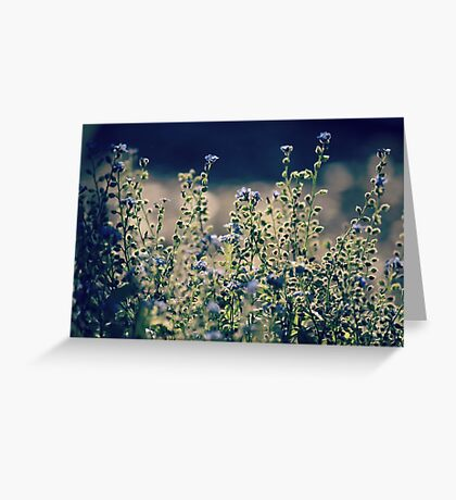 Tranquil Light Greeting Card