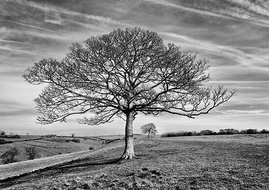 Skeletal Tree by Patricia Jacobs CPAGB LRPS BPE3