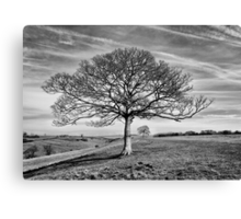 Skeletal Tree Canvas Print