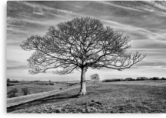 Skeletal Tree by Patricia Jacobs CPAGB LRPS BPE4