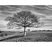 Skeletal Tree Photographic Print