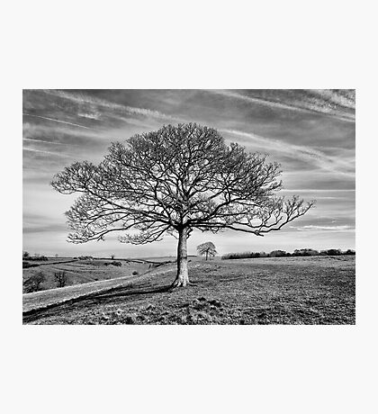 Skeletal Tree Photographic Print