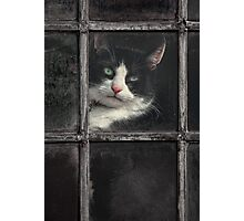 Black and White Cat Photographic Print
