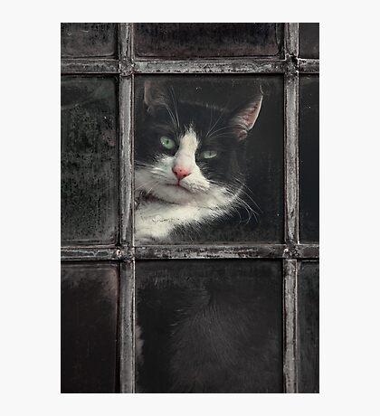 Black and White Cat Photographic Print