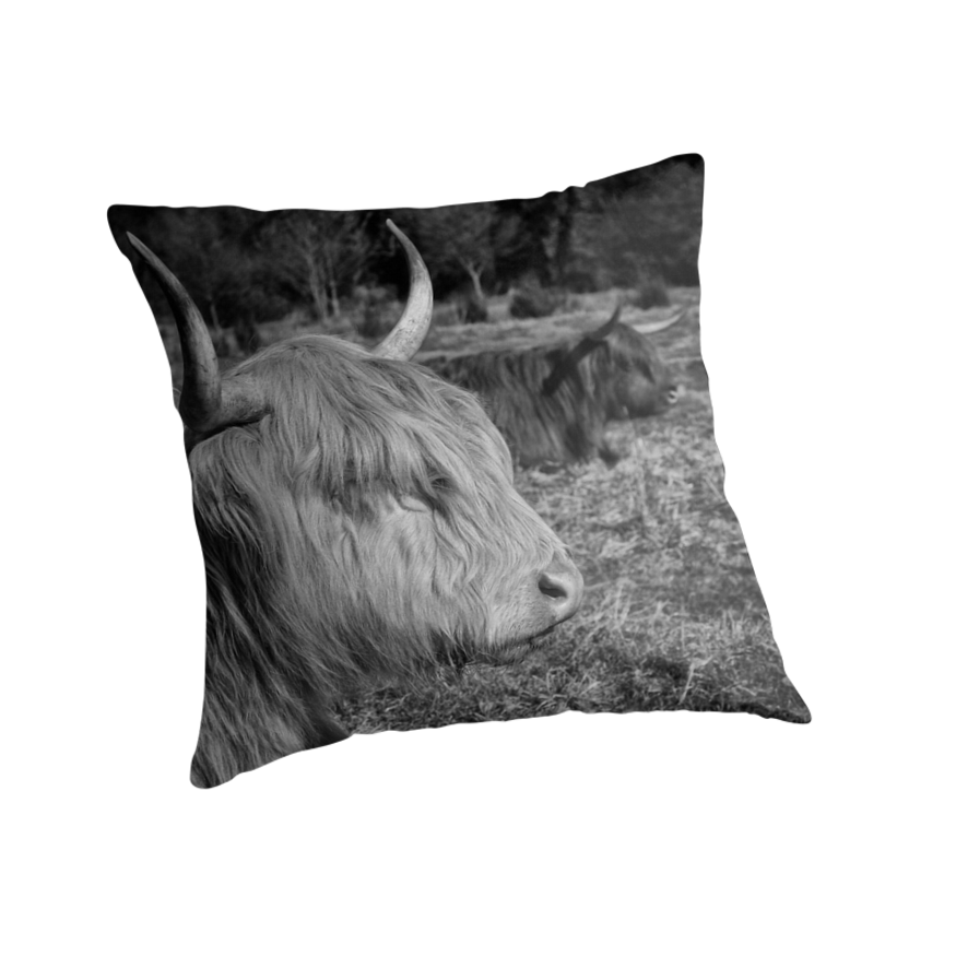 Highland Cattle by Patricia Jacobs DPAGB LRPS BPE4