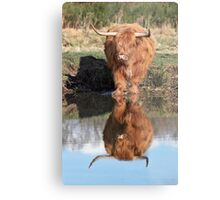 Highland Cattle Reflection Metal Print