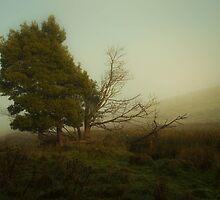 Evoke by Ian Stevenson