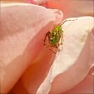 Green Prickley Spider by Benjamin Curtis