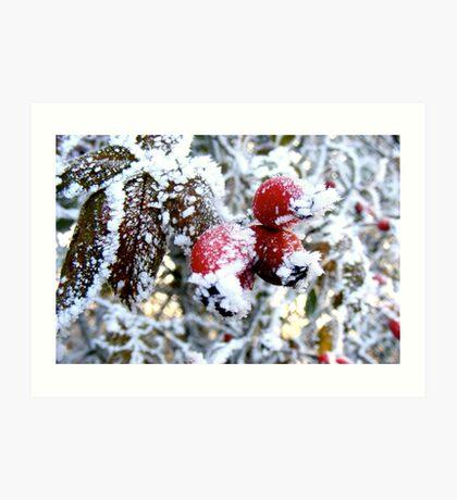 Frosty Berries Art Print