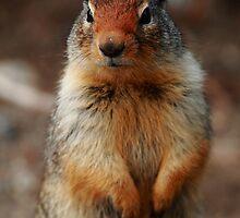 Richardson's ground squirrel by CBoyle
