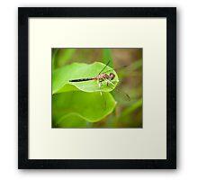 Dragon Fly Portrait Framed Print