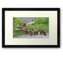 Mother looking at her little ones Framed Print