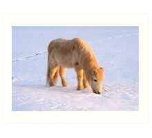Welsh Mountain Pony in the Snow Art Print