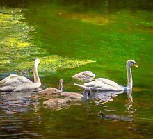 Swan Lake by Mark Richards