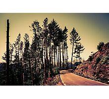 Woodland #2 Photographic Print