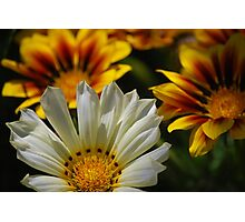 Floral Geometry Photographic Print