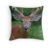 Big Antler Buck Throw Pillow