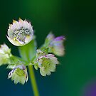 Bouquet by Rebecca Cozart