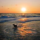 The Sea Dog by Ticker