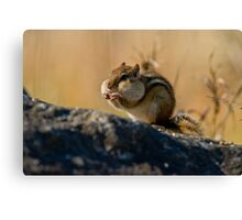 Chubby Cheeks Canvas Print