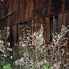 Wild Grass and Old Barn by BonnieToll