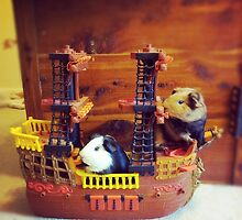 Pirate guinea pigs by Raquel Perryman