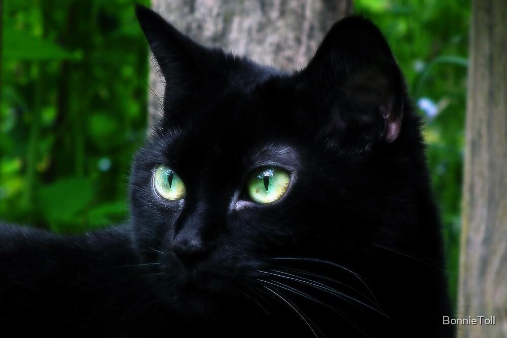 Black Beauty by BonnieToll