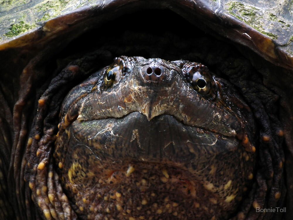 Snapping Turtle by BonnieToll