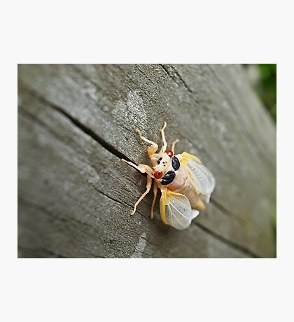 Bug! Photographic Print