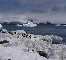 Antarctic adventure by msayuri