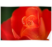 Dreamy orange rose Poster