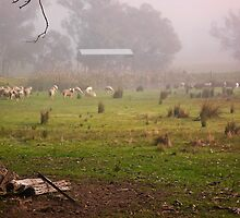 Flock in Fog by TonyCrehan