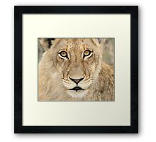I am not moving from this spot! Framed Print