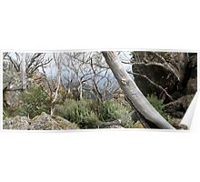 Ruggered Mt Wellington Poster