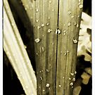 Fresh Wet by KBritt
