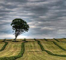 Lone Tree by Sam Smith