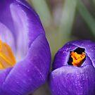 Garden Treasures by Lorelle Gromus