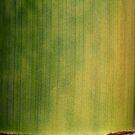 green paintbrush stroke by yvesrossetti