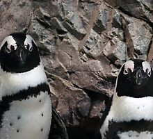 pinguins by bartfrancois
