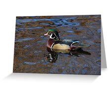Wood duck drake swimming in lake Greeting Card