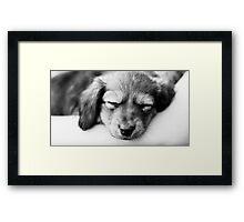 It's a Dog's Life  Framed Print