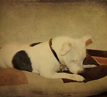 Now where did that Bit of Biscuit Get To? by Elaine Teague