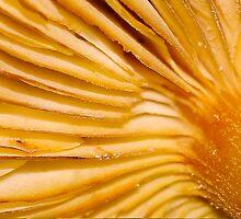 macro flora 043 by Karl David Hill