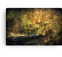 Old Forest Canvas Print