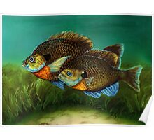 Pretty Little Panfish Poster