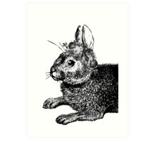The Rabbit & Roses | Black & White Art Print