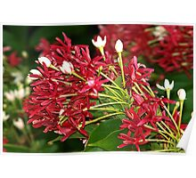 Colorful boughs of blooms Poster