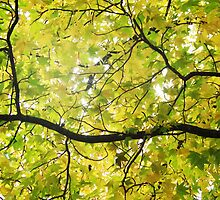 Branches and Leaves by CrystalFanning