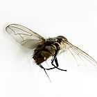 A Fly's behind by Wintermute69