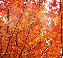 Orange and red leaves  by CrystalFanning